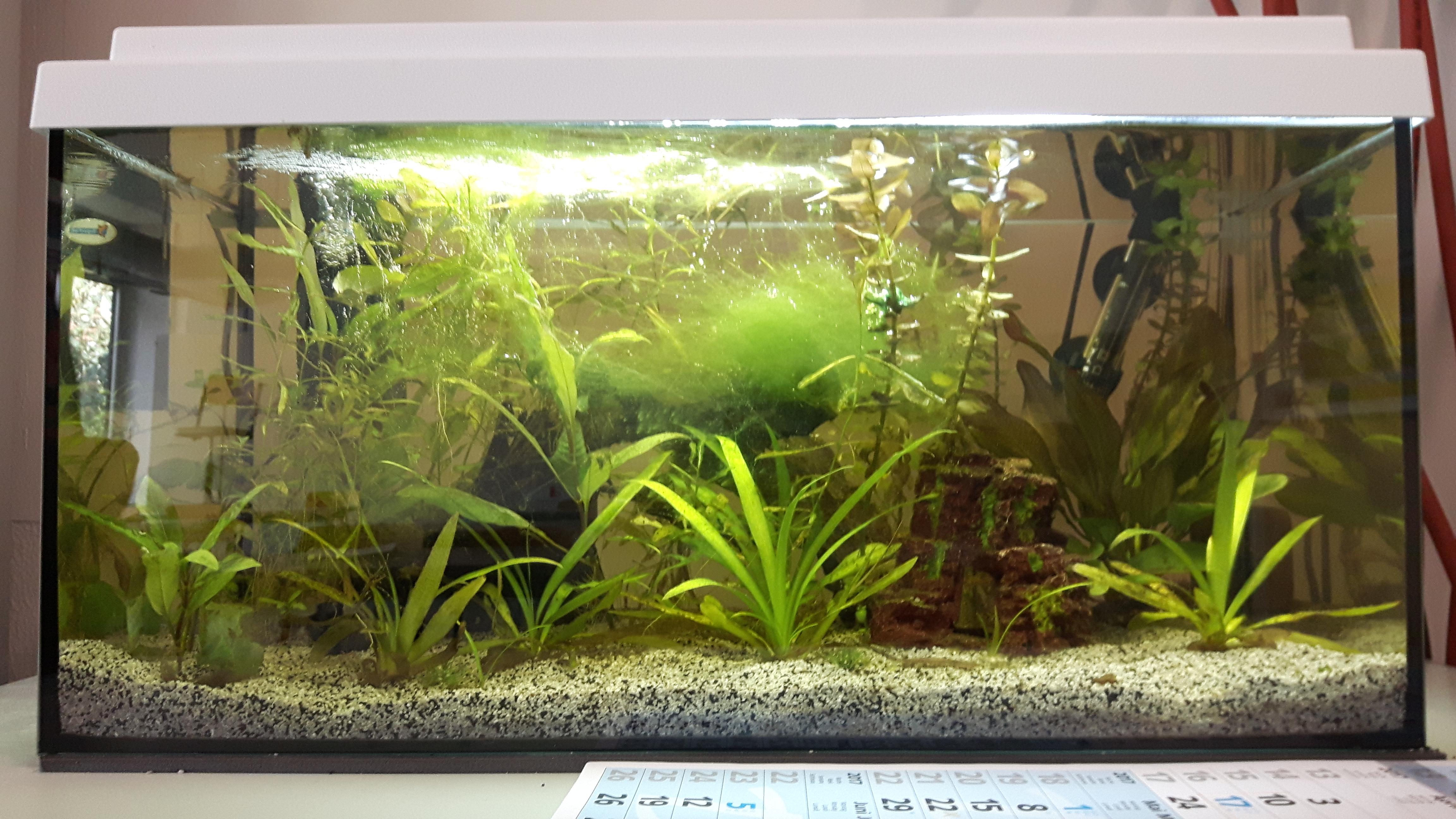 """das projekt """"aquarium"""" stellt sich vor – igs sophie sondhelm – bad, Hause ideen"""