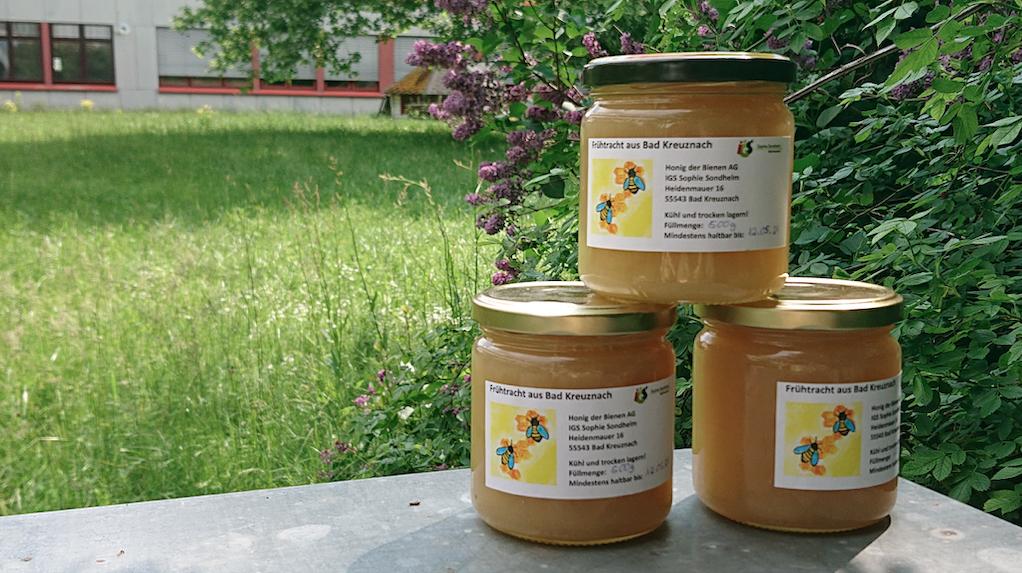 Die Schulbienen waren fleißig – Neuer Honig